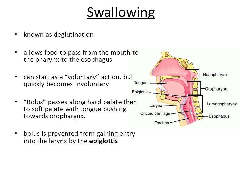 Swallowing known as deglutination
