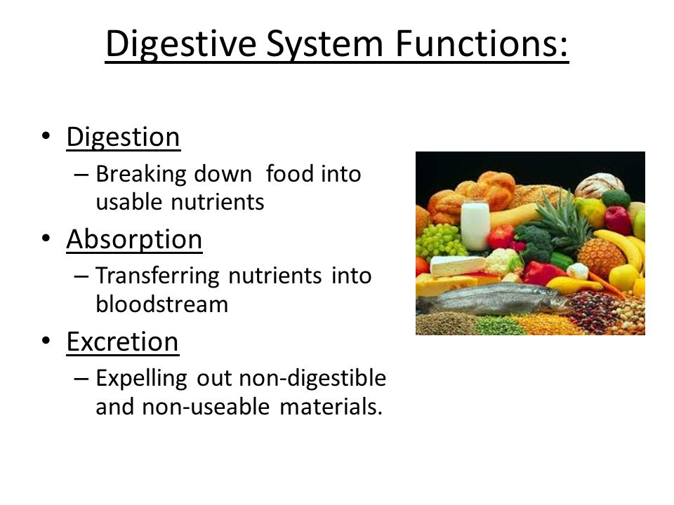 Digestive System Functions:
