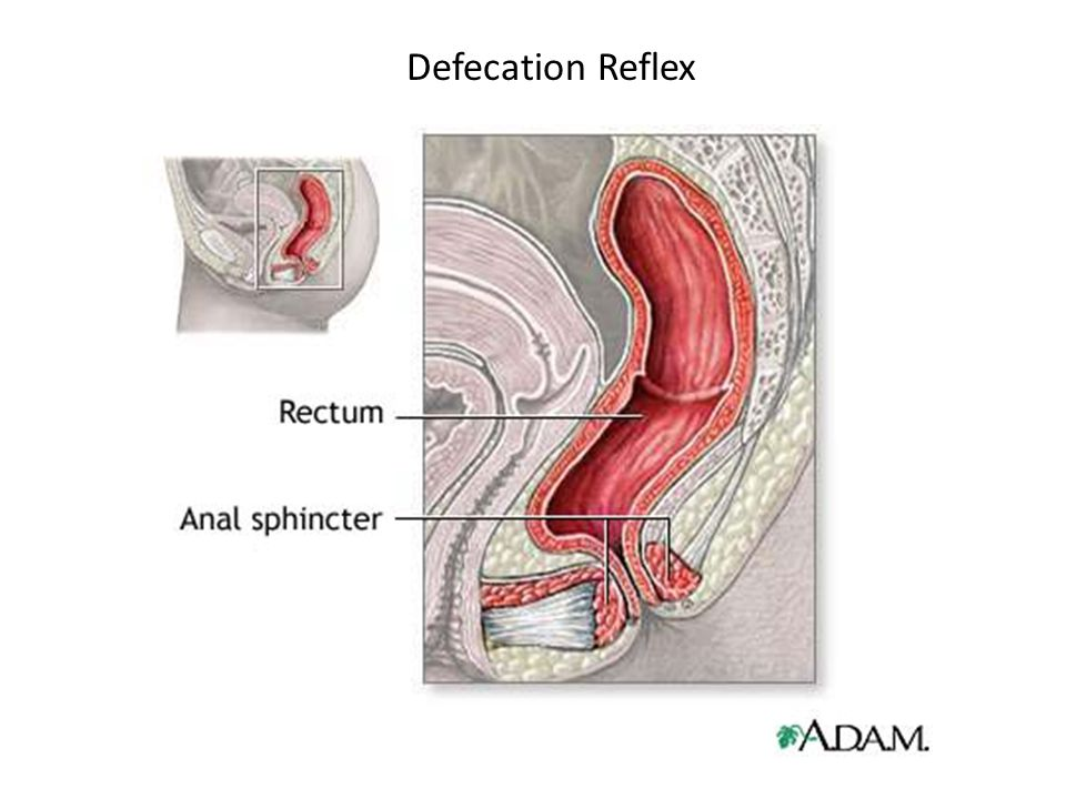 Defecation Reflex 30
