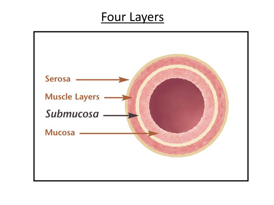 Four Layers 6