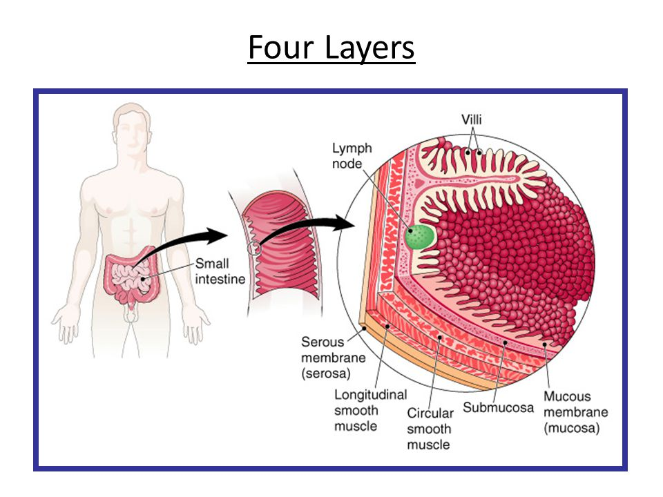 Four Layers