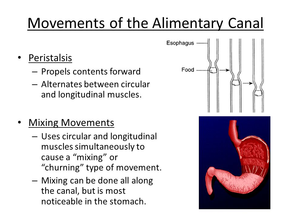 Movements of the Alimentary Canal