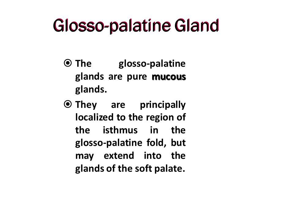 Glosso-palatine Gland
