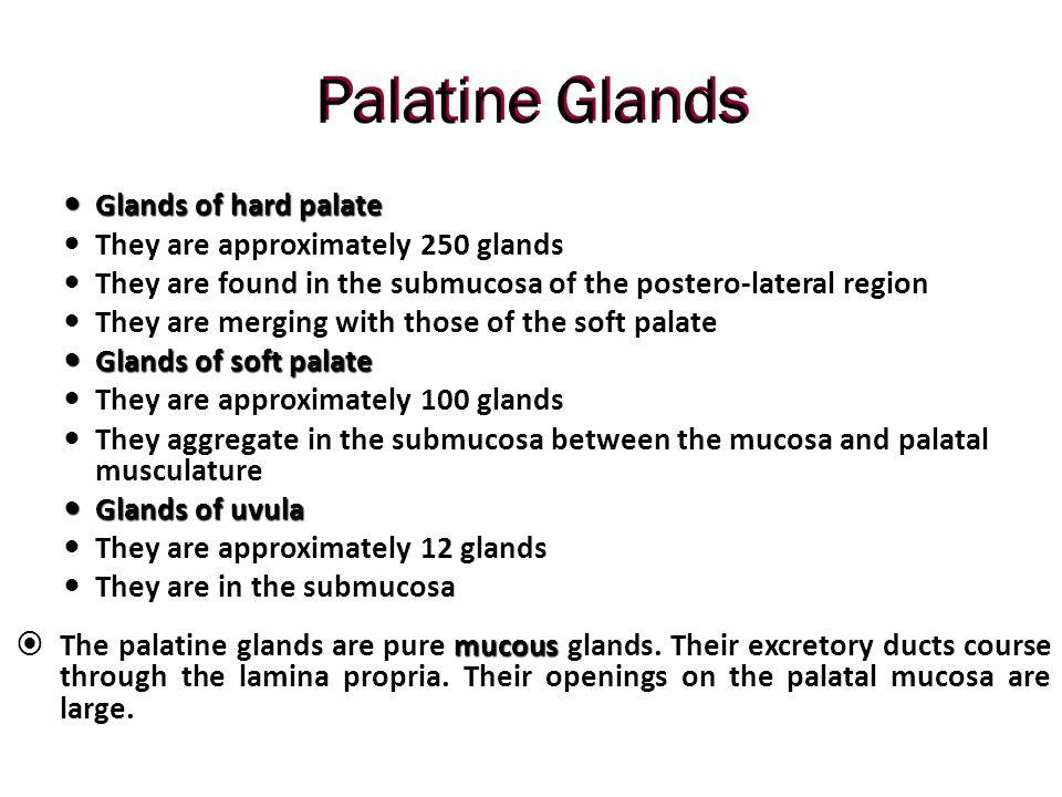 Palatine Glands Glands of hard palate