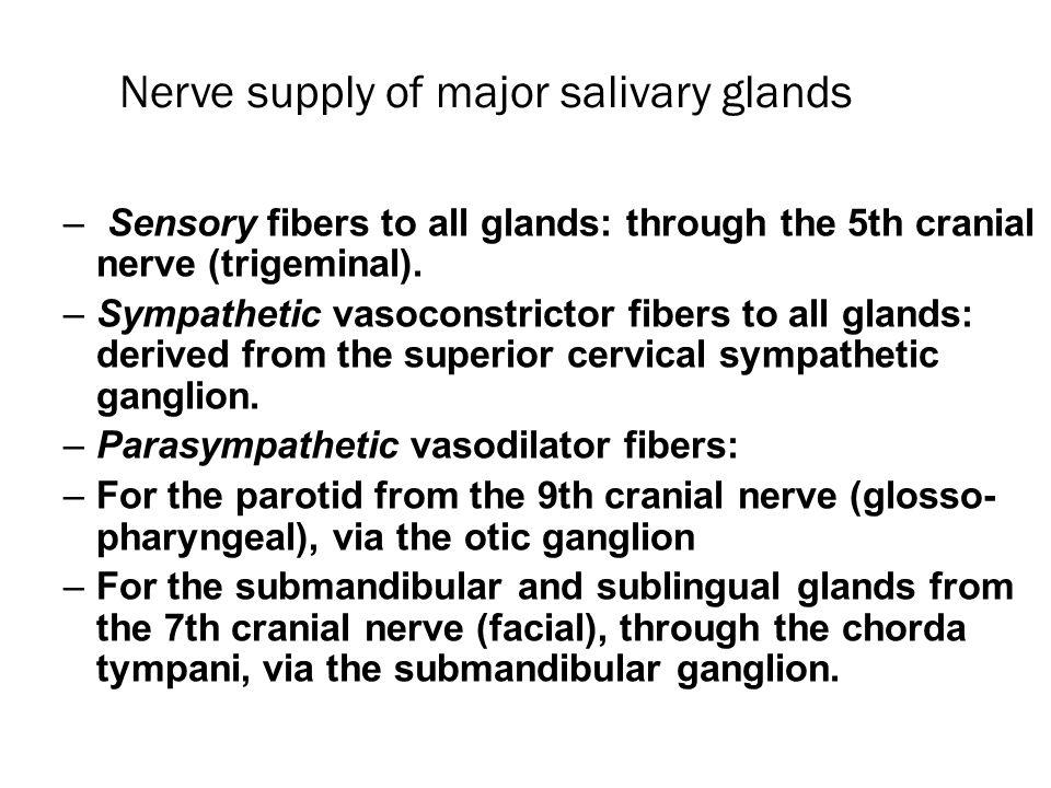 Nerve supply of major salivary glands
