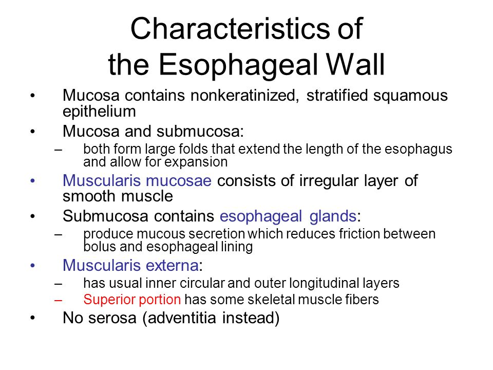 Characteristics of the Esophageal Wall