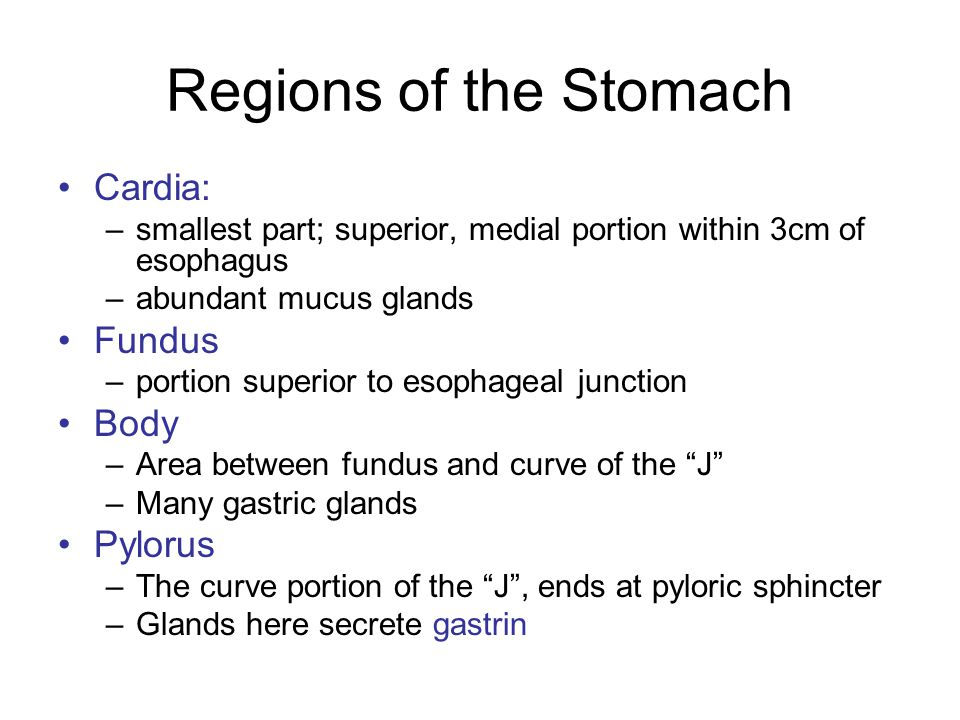 Regions of the Stomach Cardia: Fundus Body Pylorus