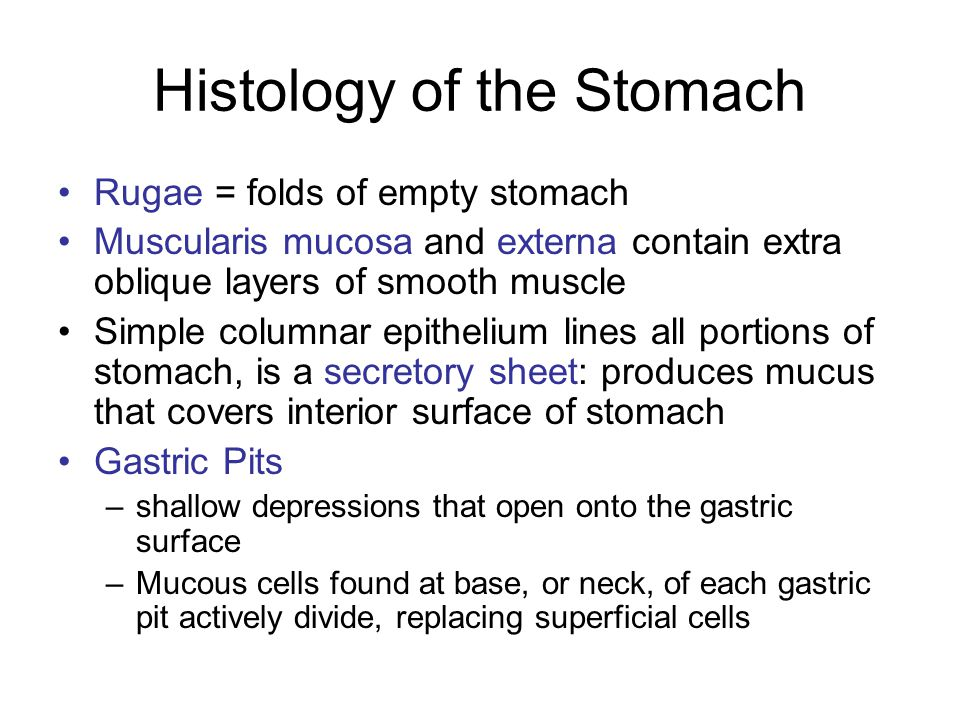 Histology of the Stomach