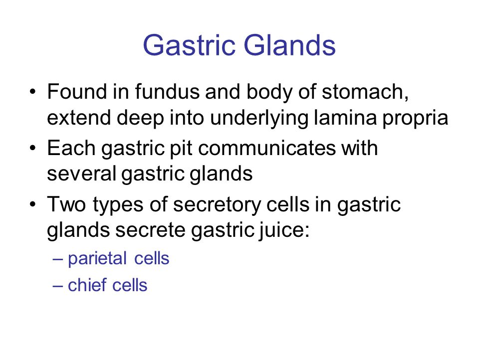 Gastric Glands Found in fundus and body of stomach, extend deep into underlying lamina propria.