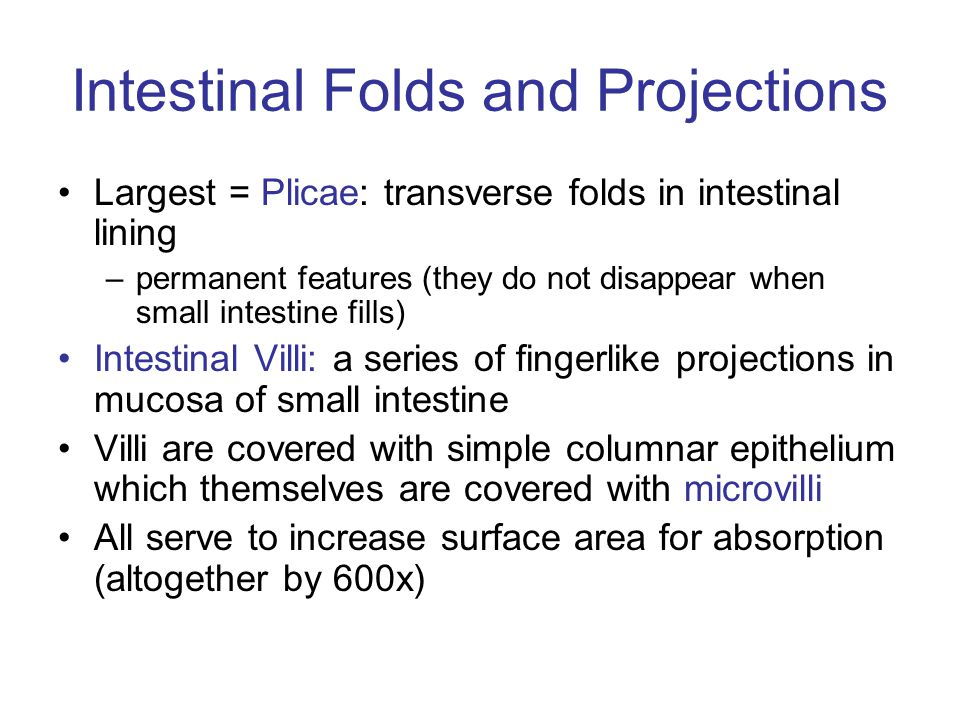 Intestinal Folds and Projections