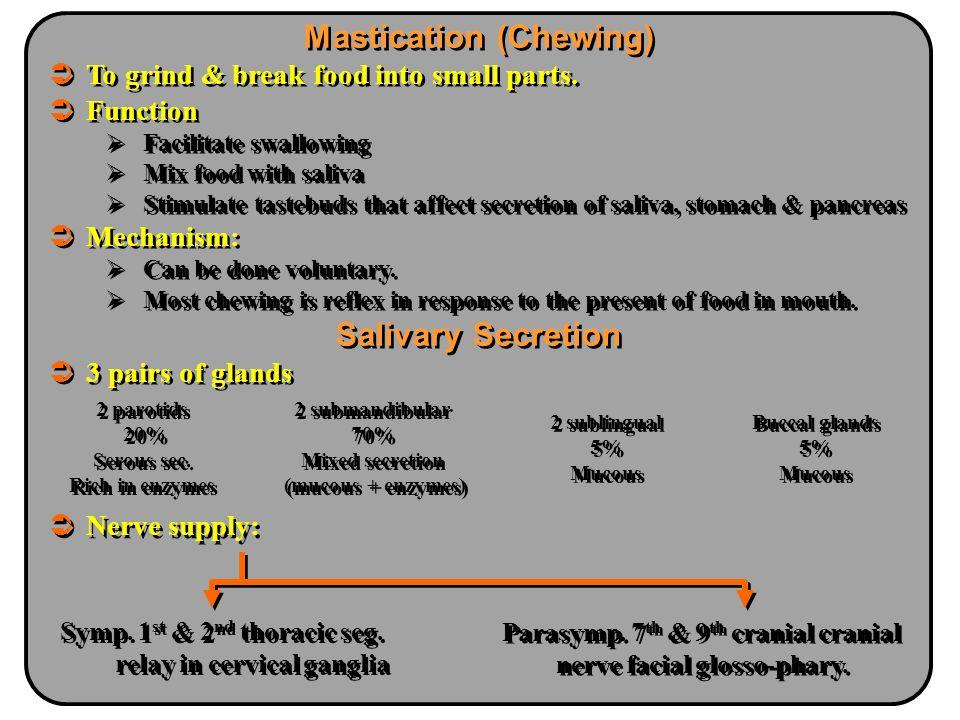 Mastication (Chewing) Salivary Secretion