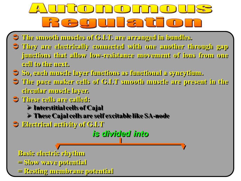 is divided into The smooth muscles of G.I.T. are arranged in bundles.