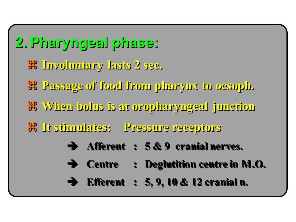 Pharyngeal phase: Involuntary lasts 2 sec.