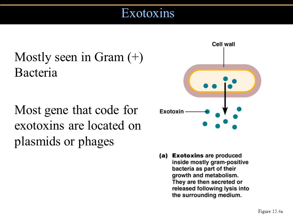 Exotoxins Mostly seen in Gram (+) Bacteria
