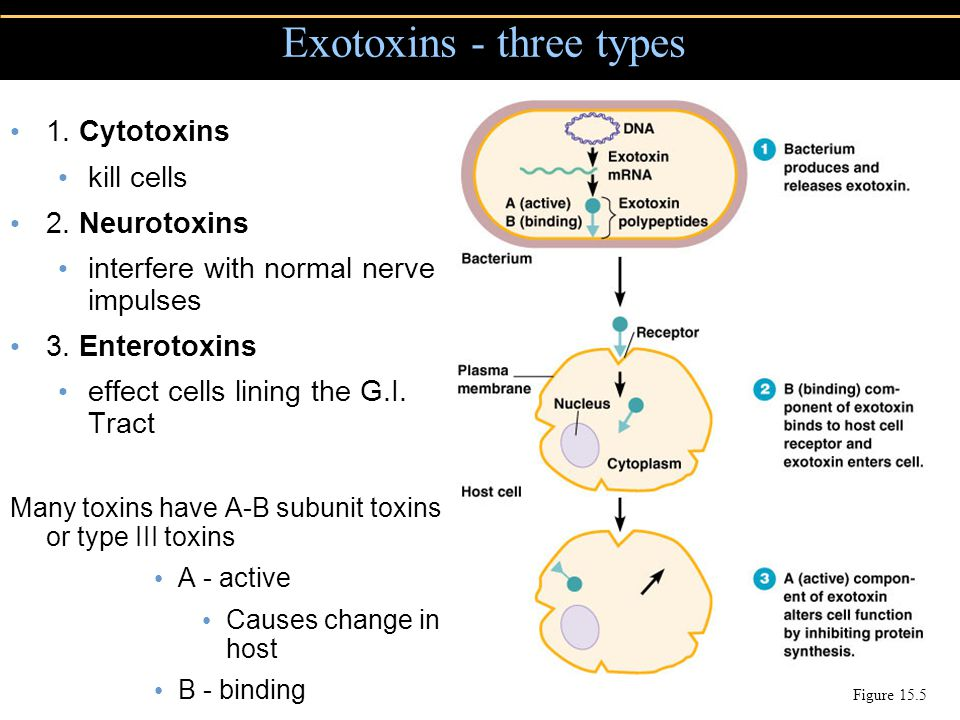 Exotoxins - three types