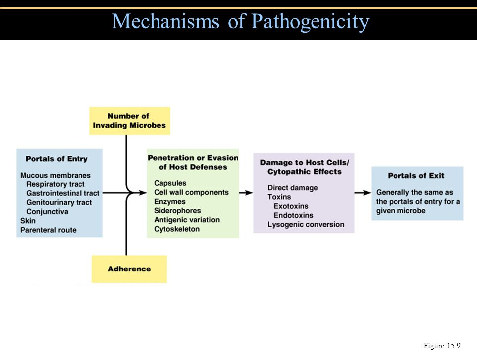 Mechanisms of Pathogenicity