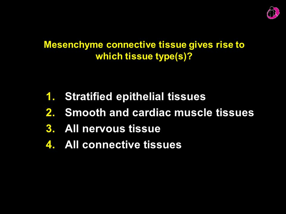Mesenchyme connective tissue gives rise to which tissue type(s)