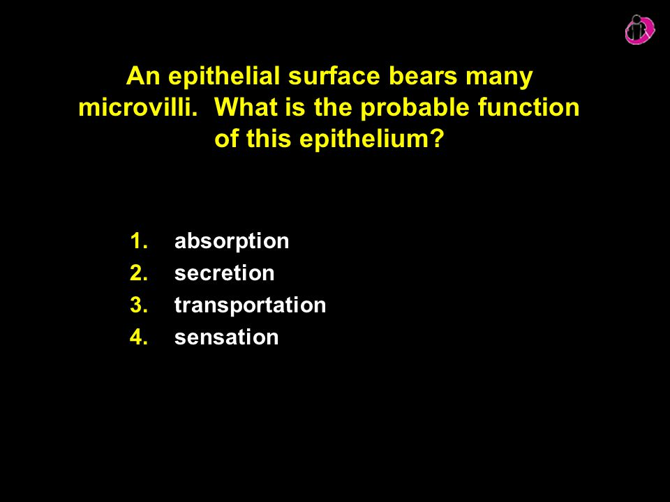 An epithelial surface bears many microvilli