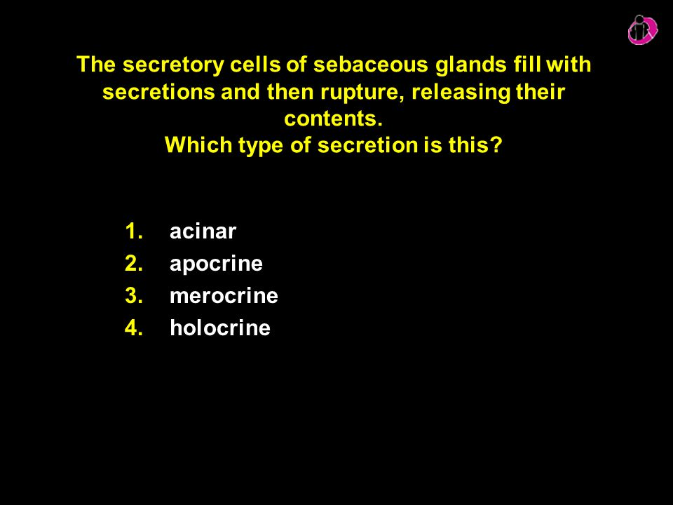 The secretory cells of sebaceous glands fill with secretions and then rupture, releasing their contents. Which type of secretion is this