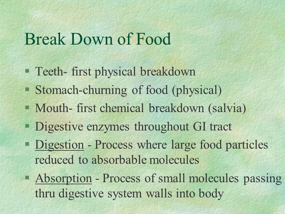 Break Down of Food Teeth- first physical breakdown