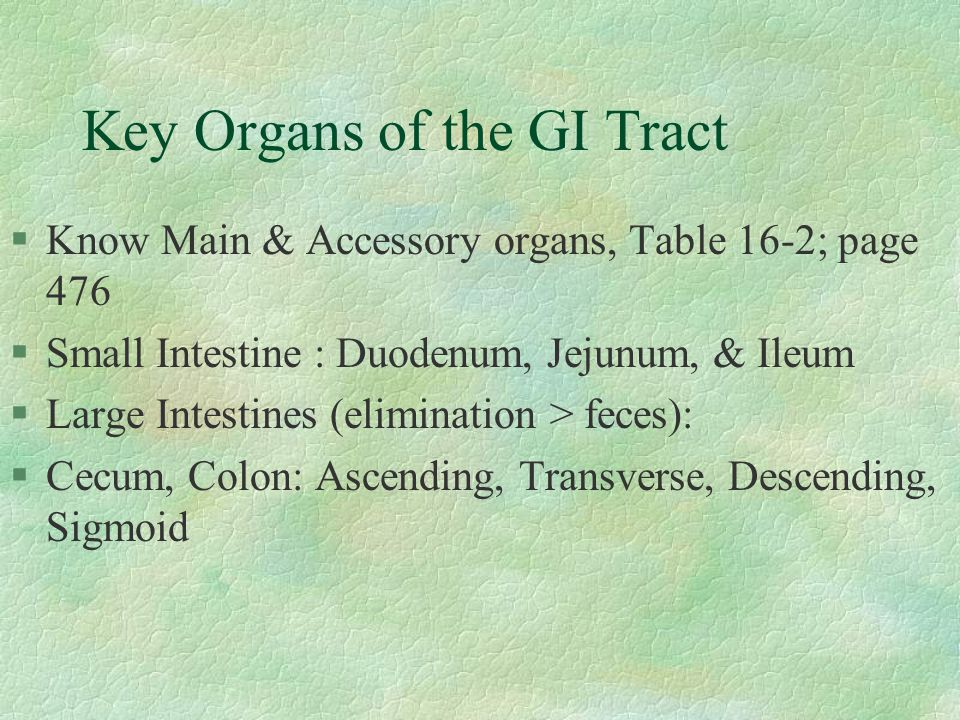 Key Organs of the GI Tract