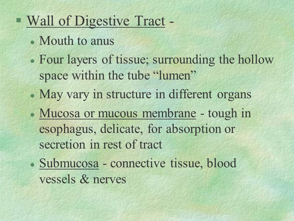 Wall of Digestive Tract -