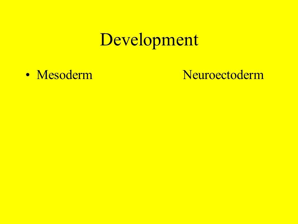 Development Mesoderm Neuroectoderm