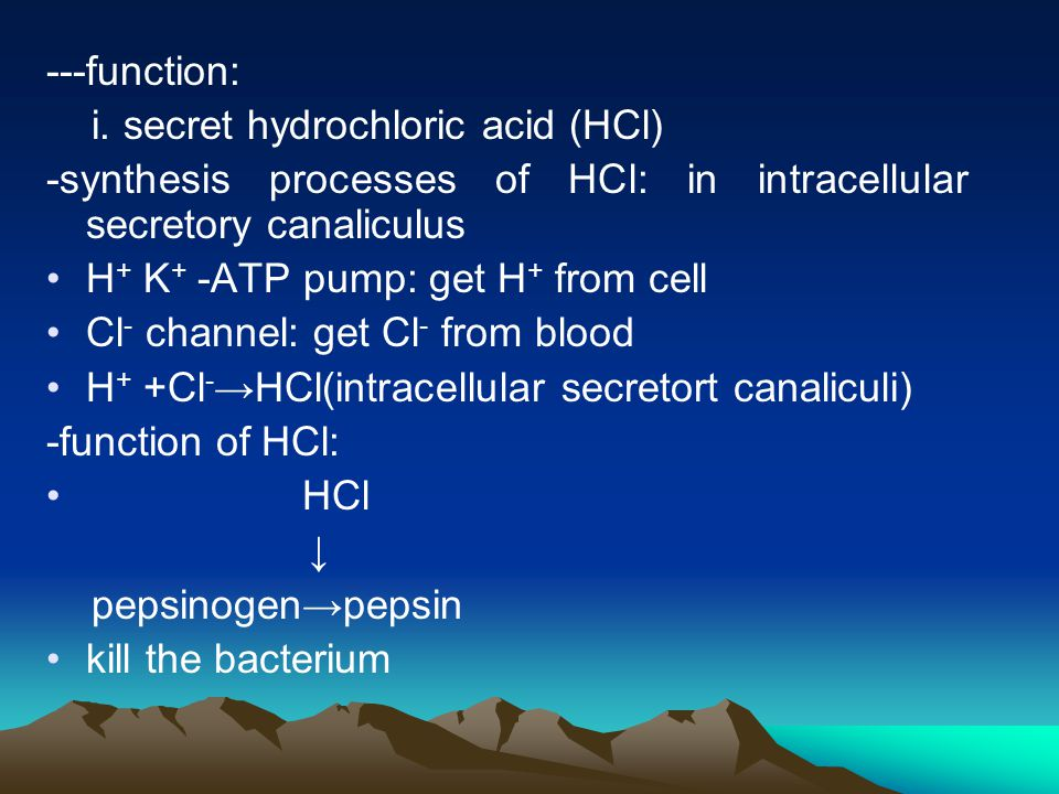 ---function: i. secret hydrochloric acid (HCl) -synthesis processes of HCl: in intracellular secretory canaliculus.