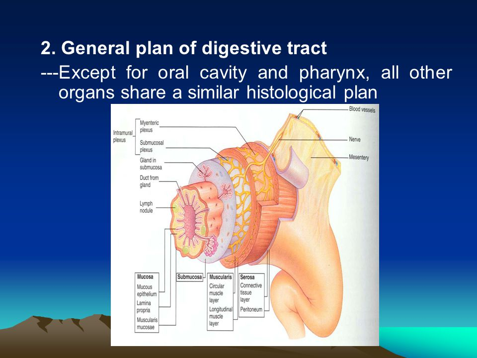 2. General plan of digestive tract
