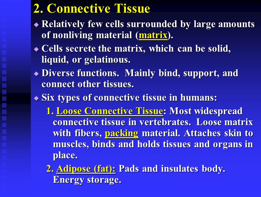 2. Connective Tissue Relatively few cells surrounded by large amounts of nonliving material (matrix).