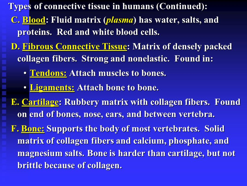 Types of connective tissue in humans (Continued):