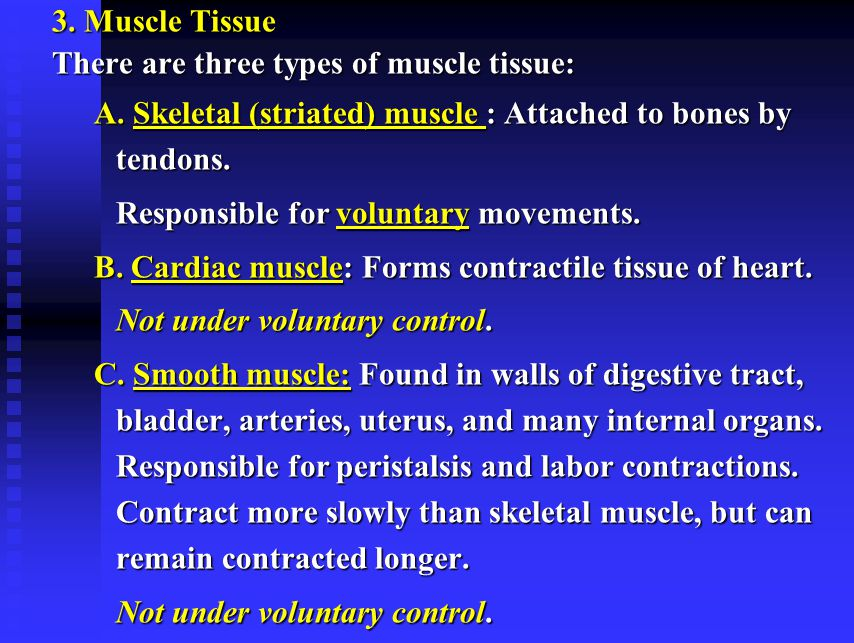 3. Muscle Tissue There are three types of muscle tissue: A. Skeletal (striated) muscle : Attached to bones by tendons.