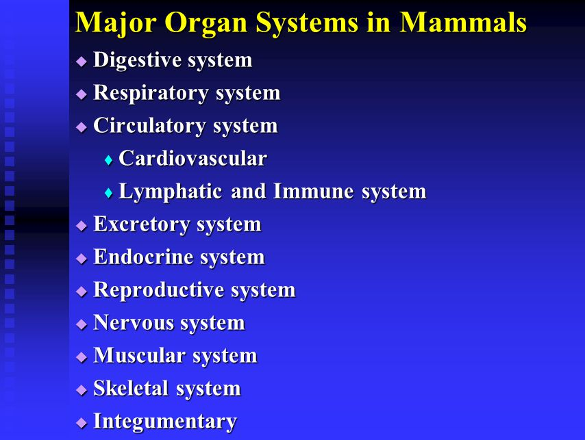 Major Organ Systems in Mammals