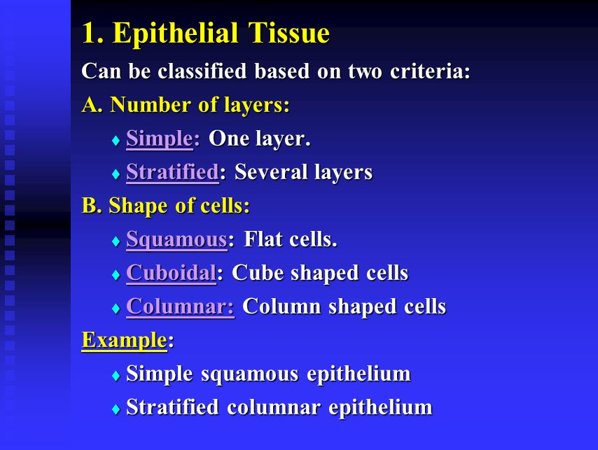 1. Epithelial Tissue Can be classified based on two criteria: