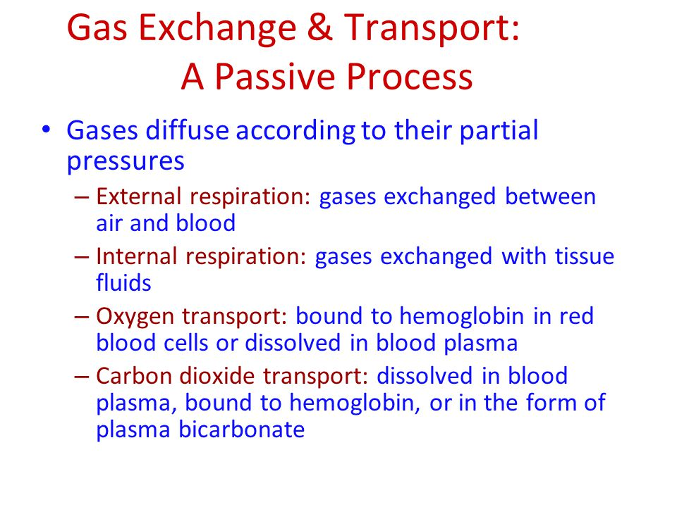 Gas Exchange & Transport: A Passive Process