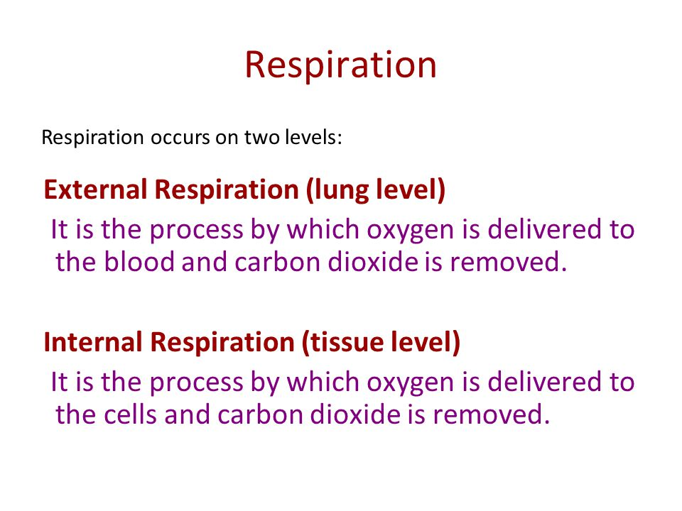 Respiration External Respiration (lung level)
