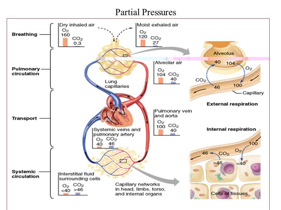 Partial Pressures