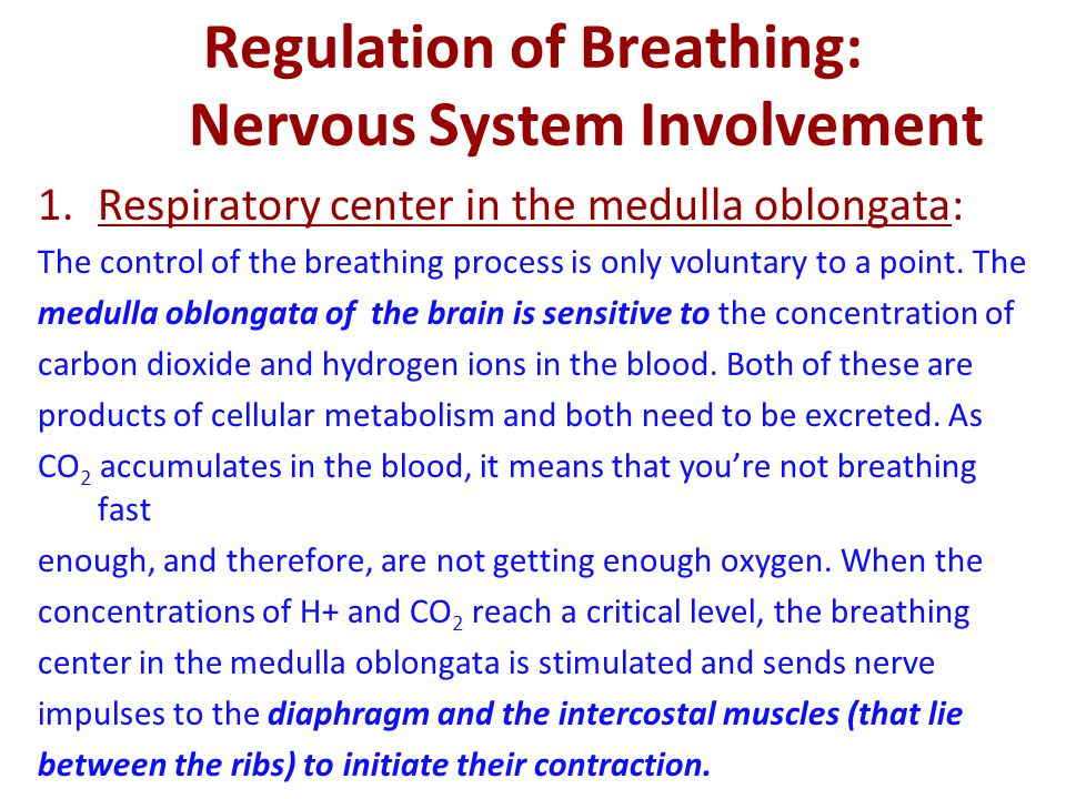 Regulation of Breathing: Nervous System Involvement