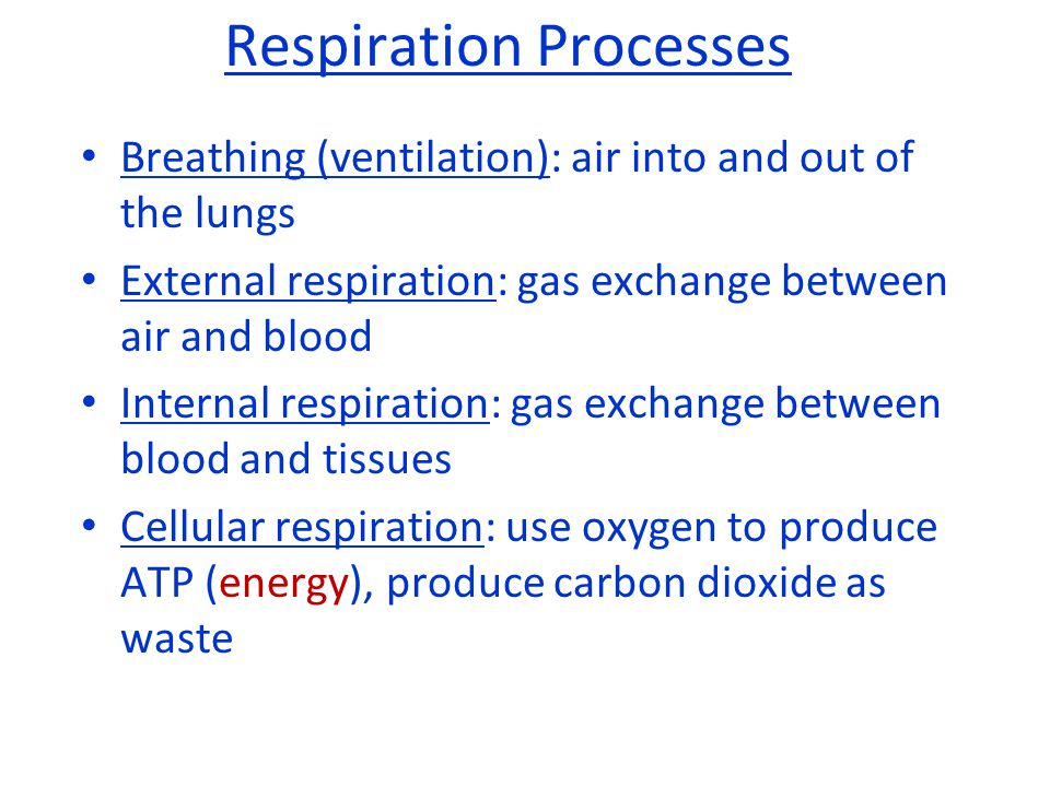 Respiration Processes