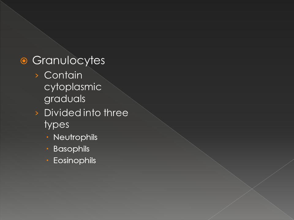 Granulocytes Contain cytoplasmic graduals Divided into three types