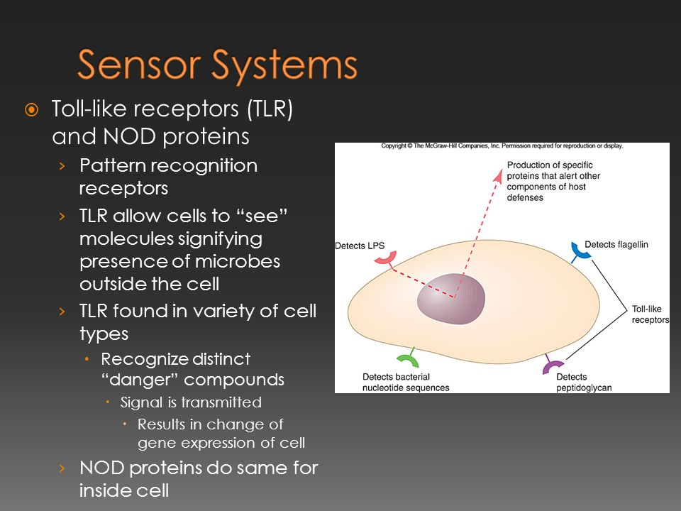 Sensor Systems Toll-like receptors (TLR) and NOD proteins