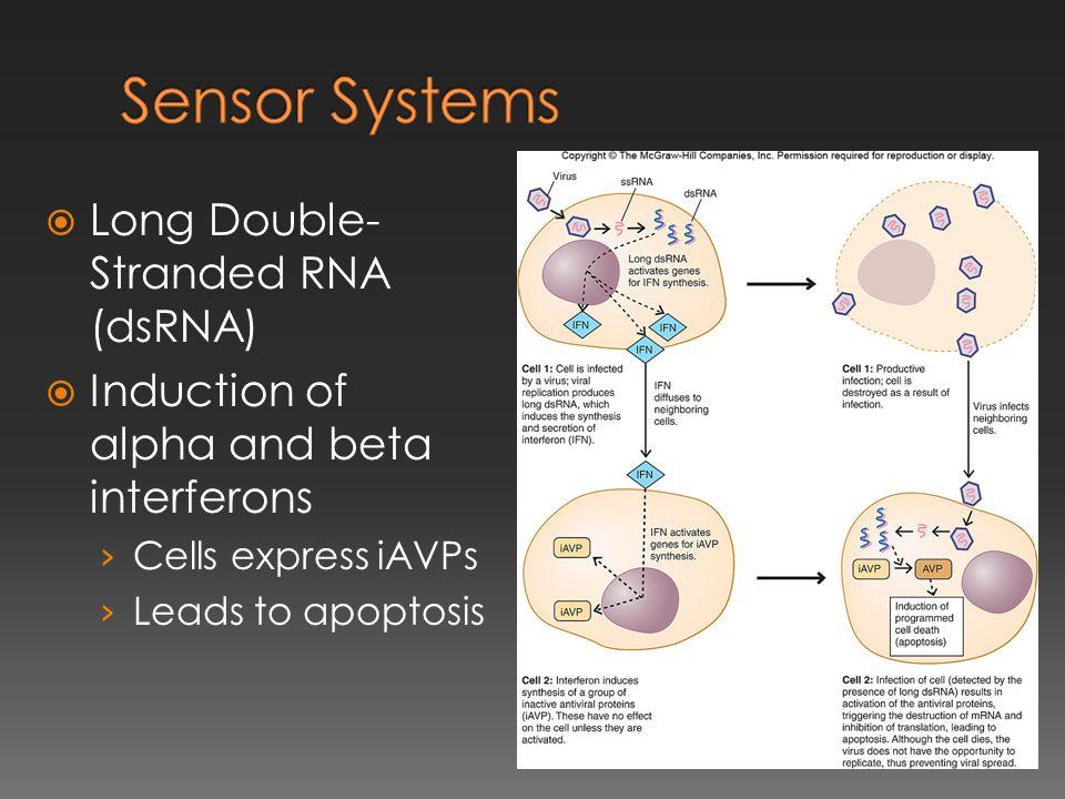 Sensor Systems Long Double-Stranded RNA (dsRNA)