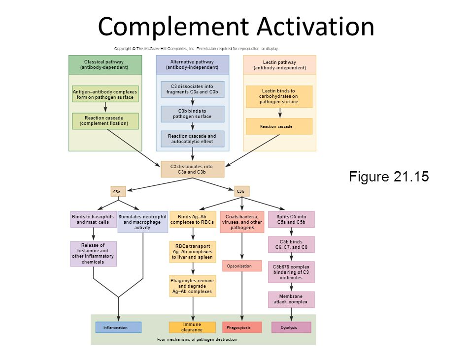 Complement Activation