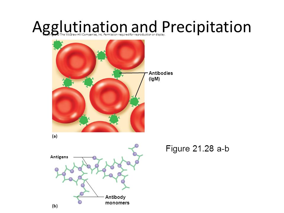 Agglutination and Precipitation