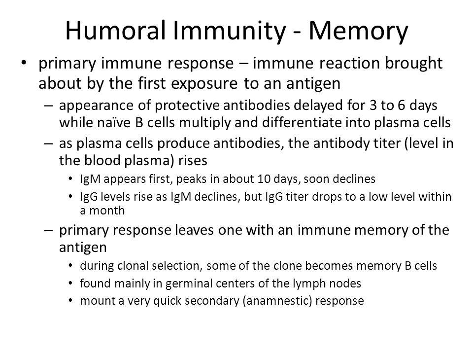 Humoral Immunity - Memory