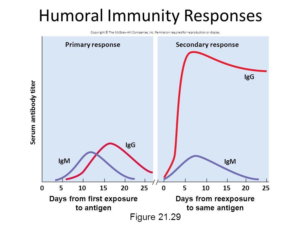 Humoral Immunity Responses