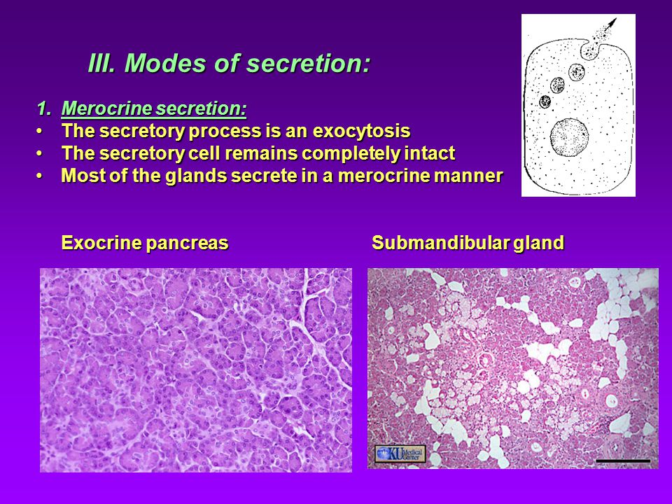 III. Modes of secretion: