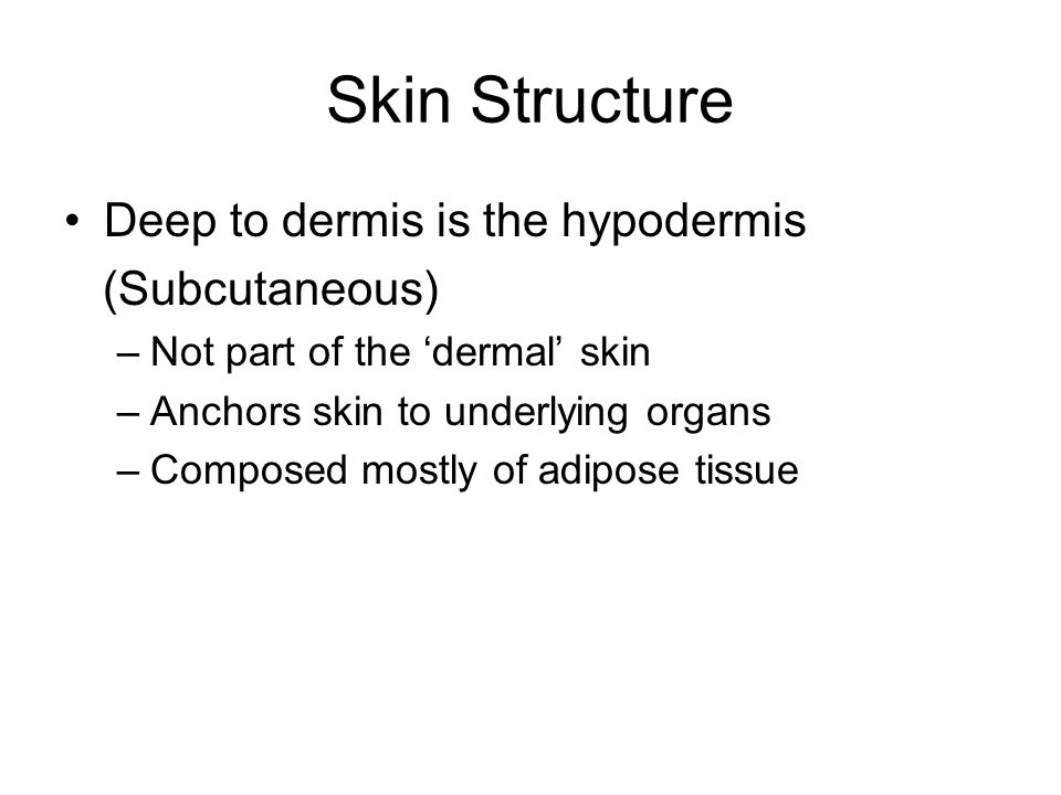 Skin Structure Deep to dermis is the hypodermis (Subcutaneous)