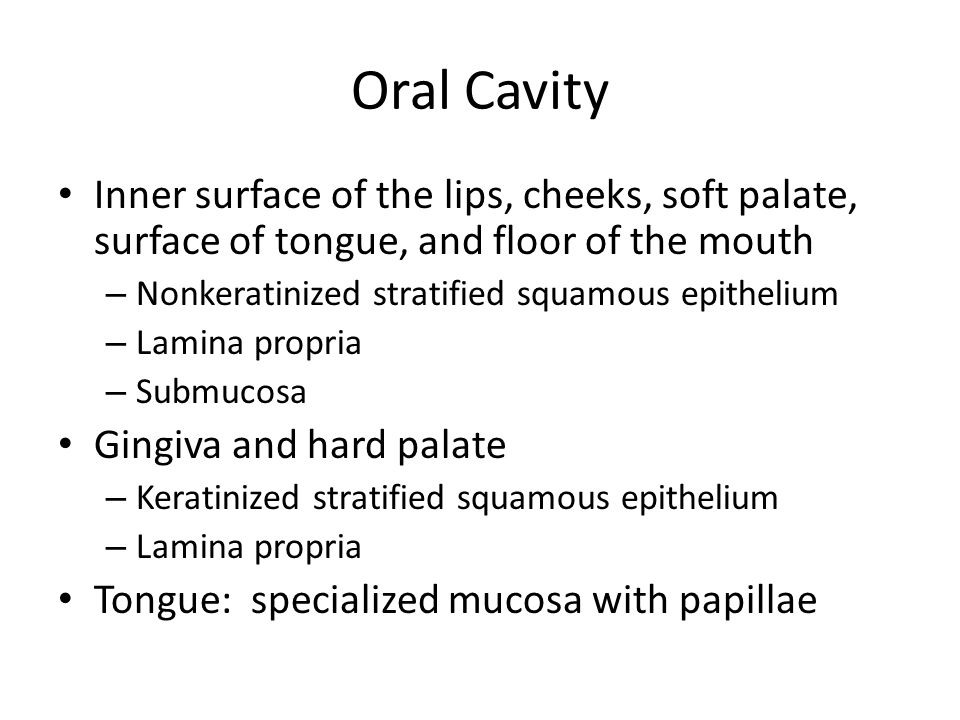Oral Cavity Inner surface of the lips, cheeks, soft palate, surface of tongue, and floor of the mouth.
