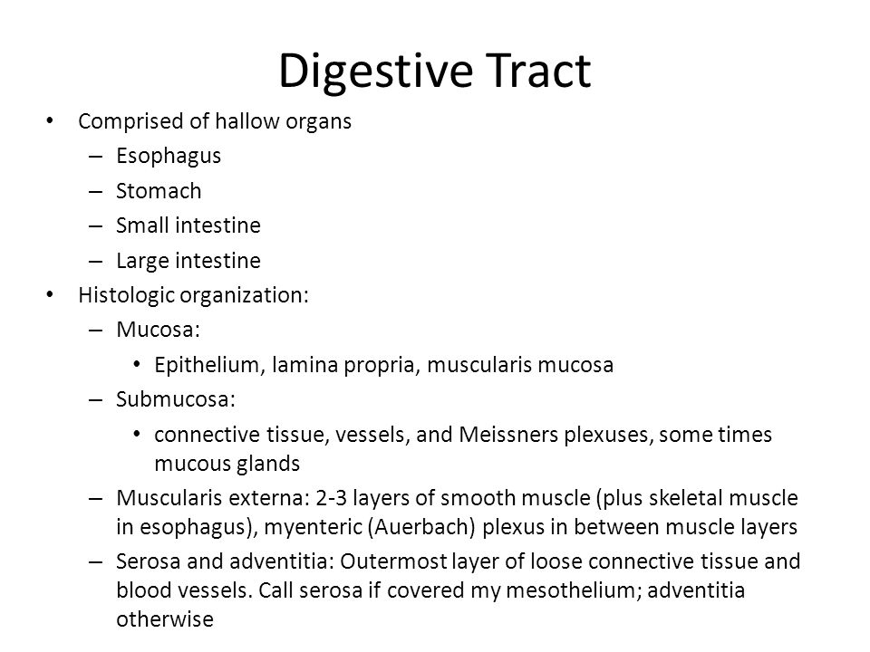 Digestive Tract Comprised of hallow organs Esophagus Stomach
